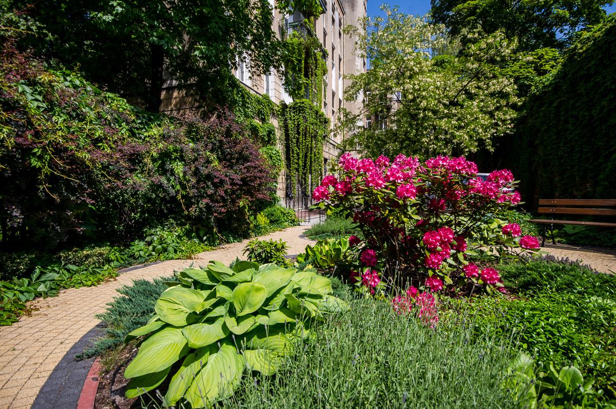 Tajemniczy ogrod 06