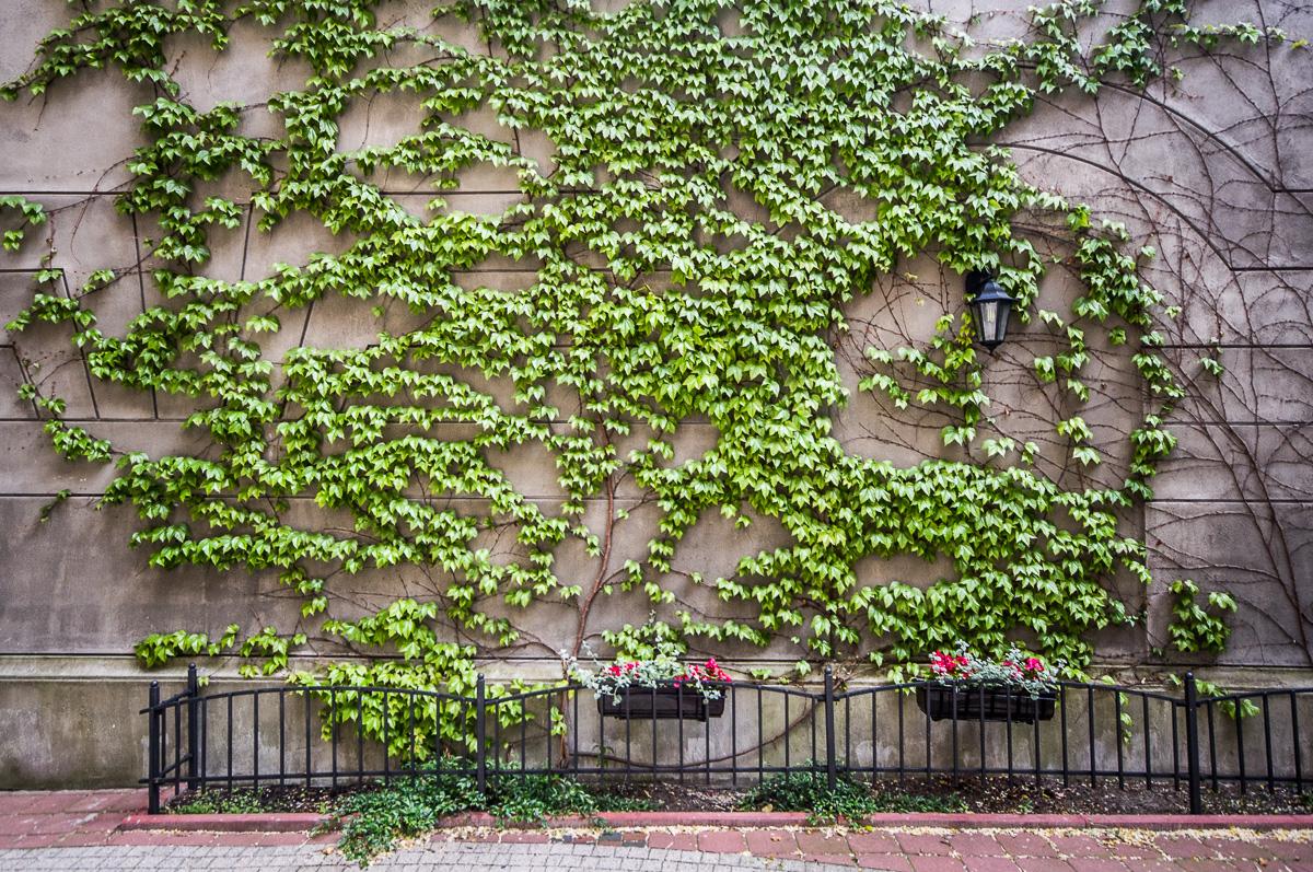 Tajemniczy ogrod 08