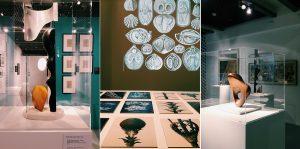 Superorganizm i doświadczenie przyrody 10
